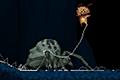 [蜘蛛の糸を操る主人公の洞窟探索アクションゲーム]Spiderling